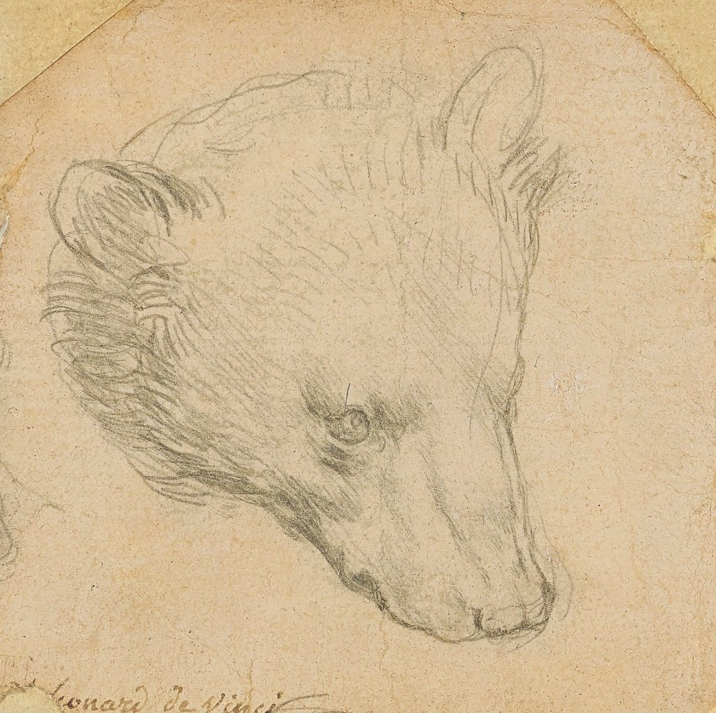 drawing of the head of a bear